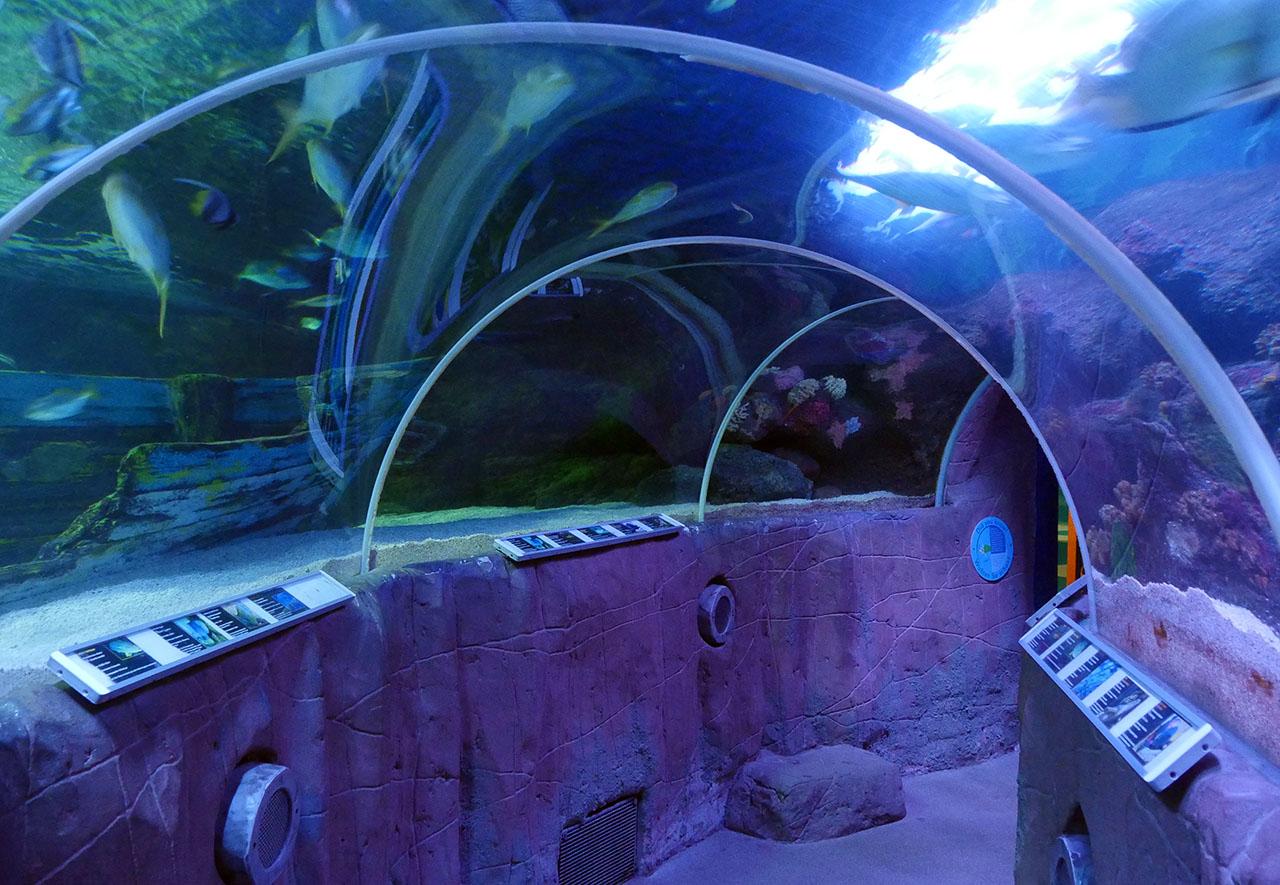SEA-LIFE Timmendorfer Strand Multimar Wattforum Aquarium GEOMAR Ostsee ...