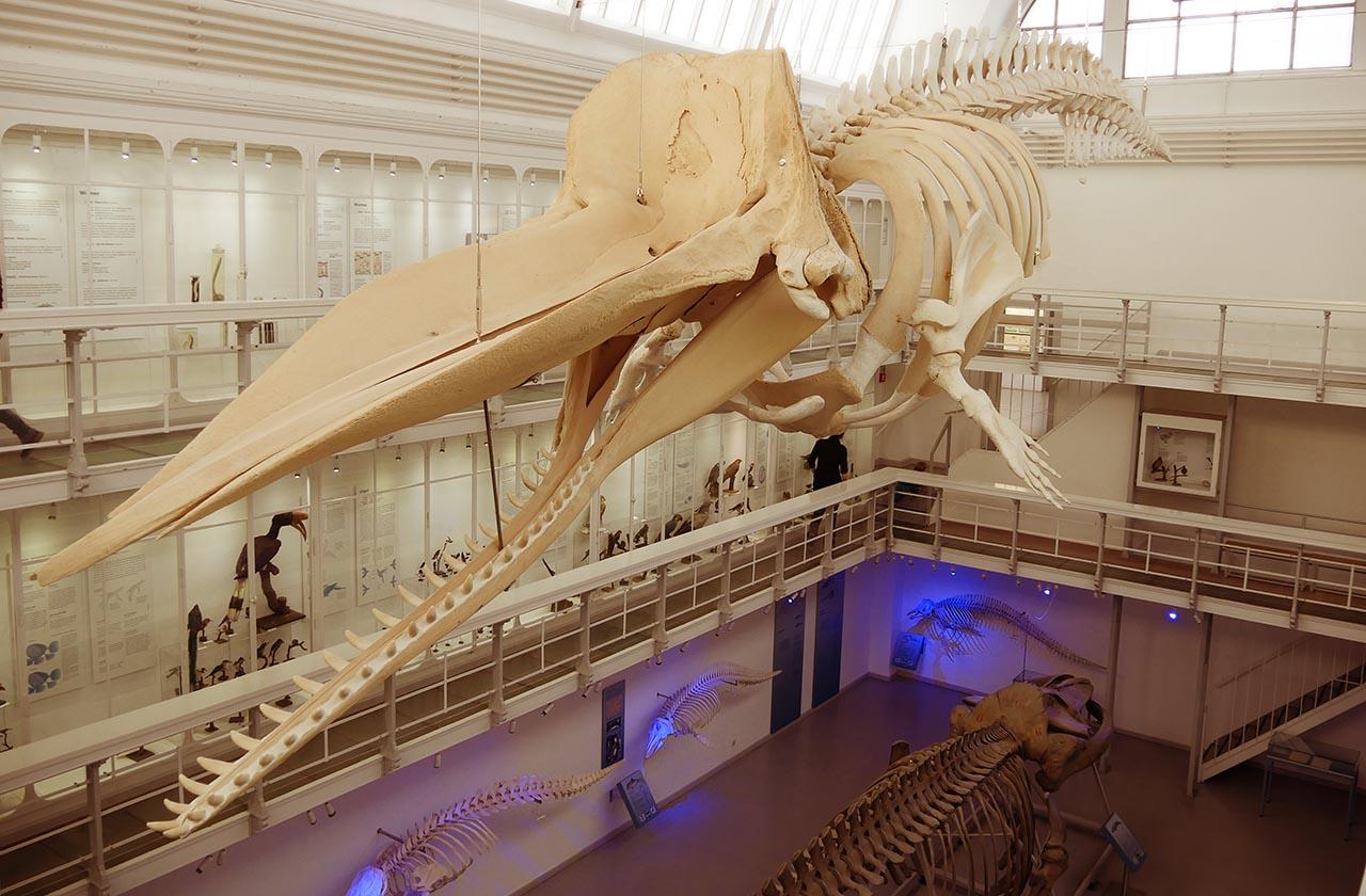 Zoologisches Museum Kiel Nordtipps