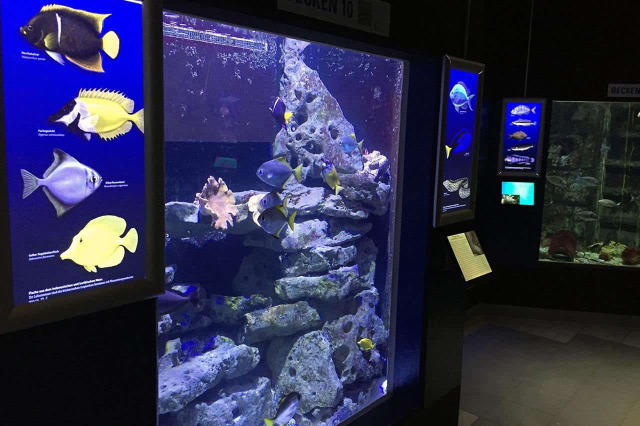 aquarium geomar